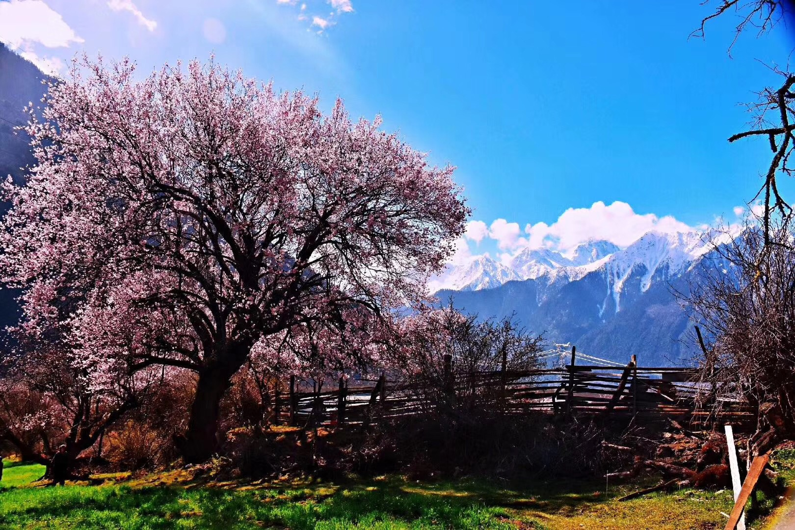(西藏.林芝桃花节)拉萨-羊湖-林芝.单卧单飞9天品质游