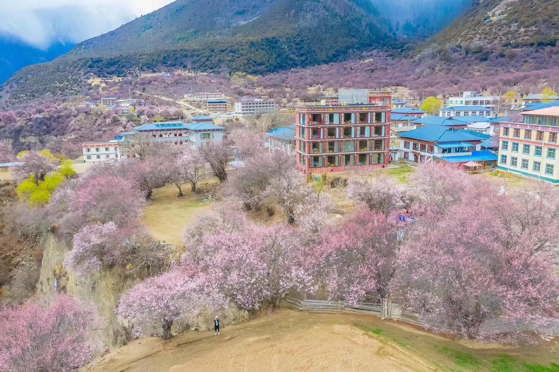 西藏拉萨-羊湖-林芝 桃花8日游
