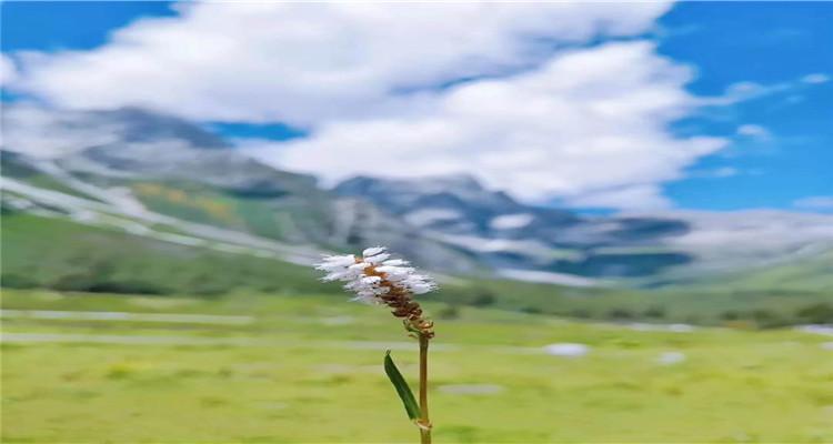 雅安神木垒和平藏寨避暑5日