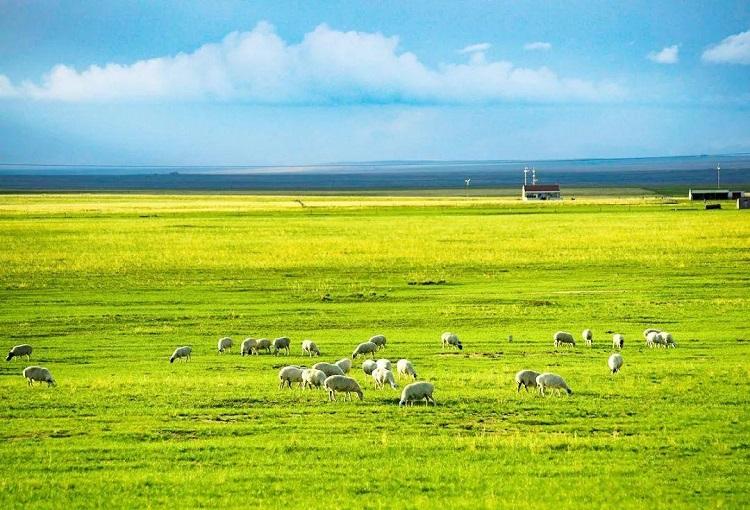 去内蒙古我觉得这份攻略你需要收藏-中国国家地理推荐-内蒙古摄影指南