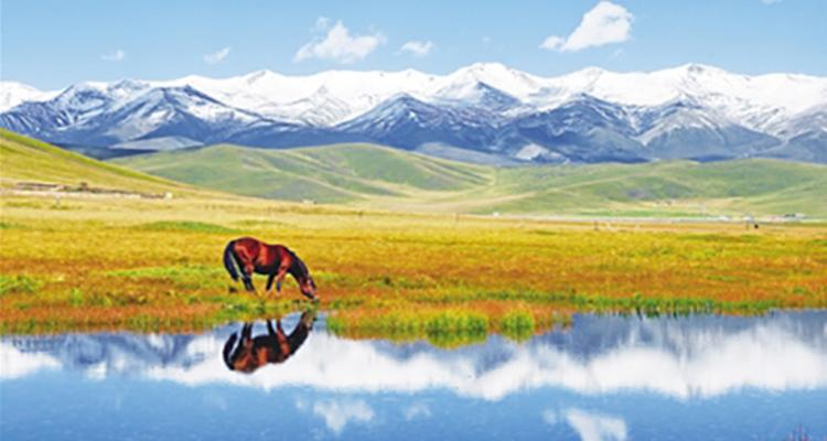 西藏单卧单飞拉萨、羊湖、纯玩六日游
